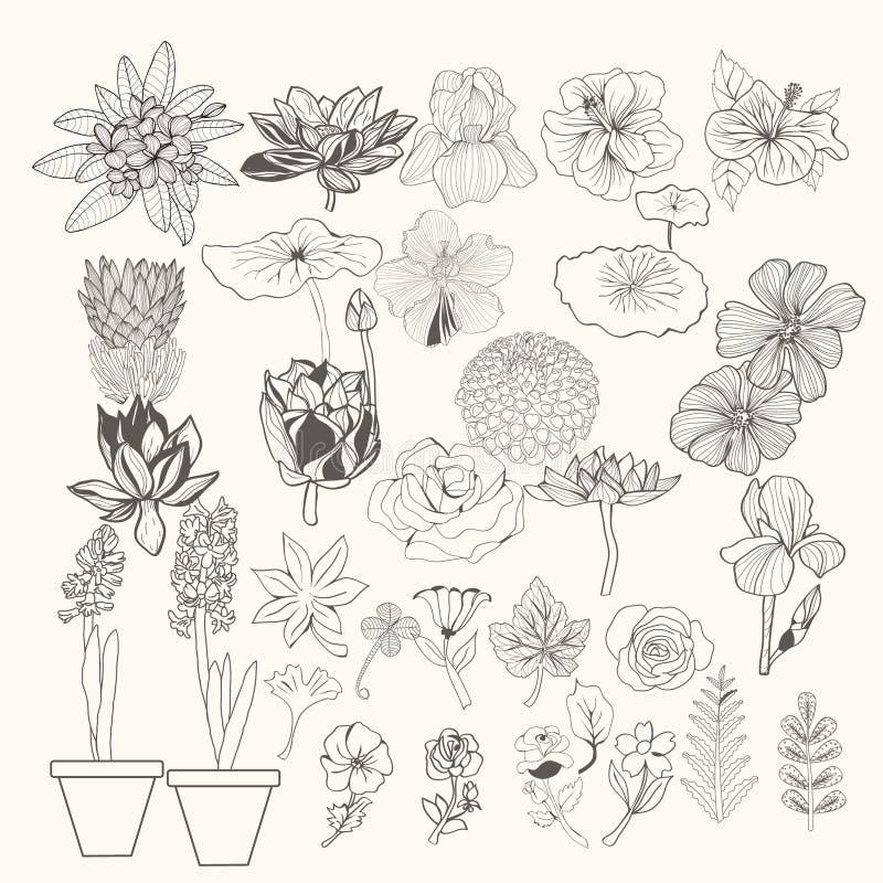 O elemento do projeto da ilustração florescem e a linha arte das folhas ilustração stock