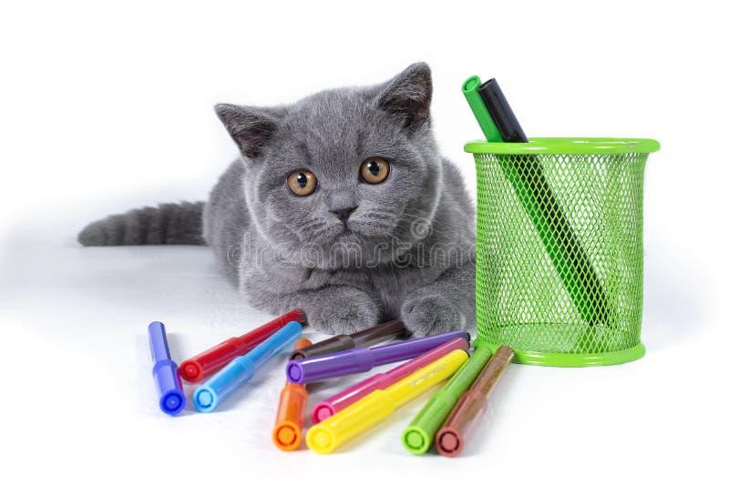 O encantamento, gatinho britânico do puro-sangue cinzento, macio, um vidro com canetas com ponta de feltro, em um fundo branco Bo fotografia de stock