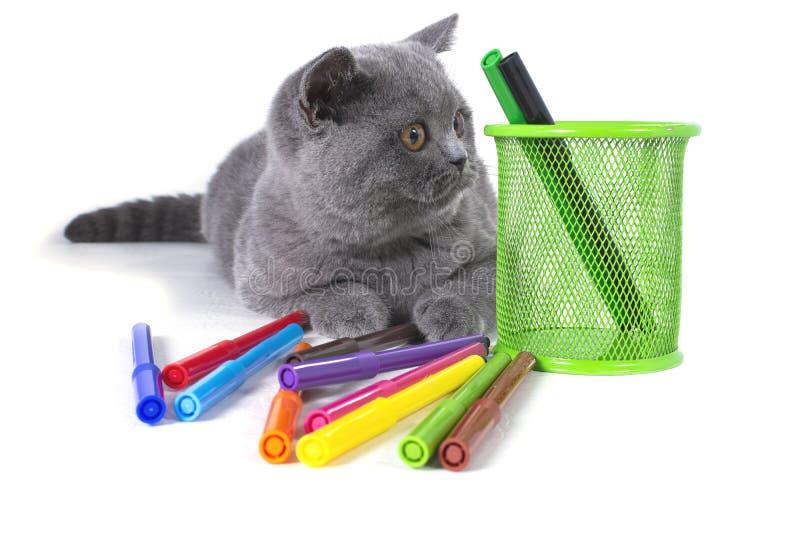 O encantamento, gatinho britânico do puro-sangue cinzento, macio, um vidro com canetas com ponta de feltro, em um fundo branco Bo imagens de stock royalty free
