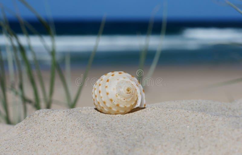 O eremita crabs para casa imagens de stock royalty free
