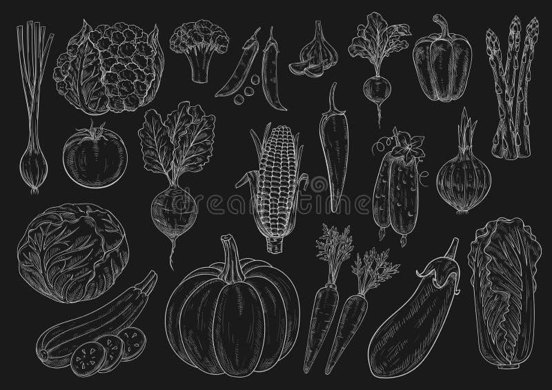 O esboço do giz do vetor dos vegetais isolou os ícones ajustados ilustração royalty free