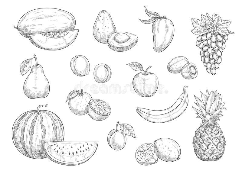 O esboço isolado fruto ajustou-se para o alimento, projeto do suco ilustração royalty free