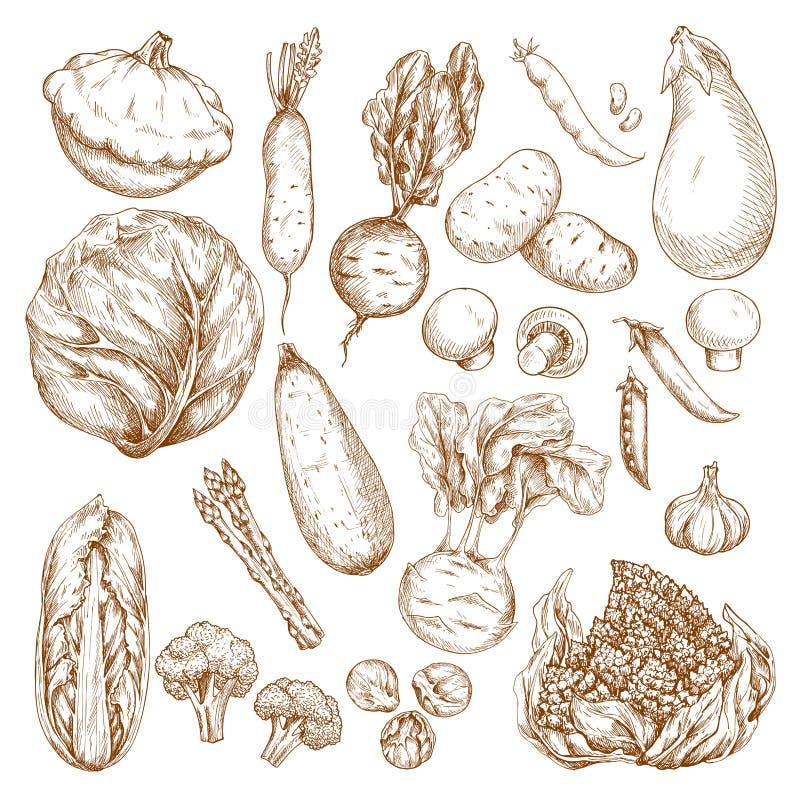 O esboço isolou os ícones do vetor dos vegetais ajustados ilustração stock