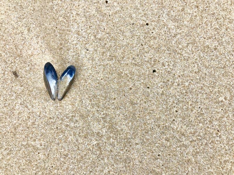 O escudo aberto do mexilhão azul em um formulário do coração encontra-se na praia do mar fotografia de stock royalty free