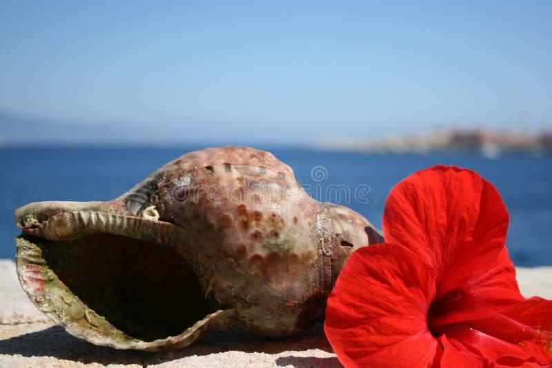 O escudo do caracol de água e os hibiscus vermelhos florescem Greece imagem de stock royalty free