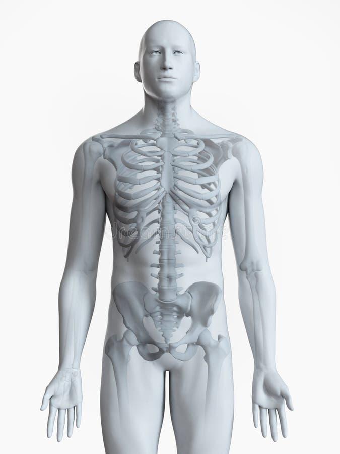 O esqueleto ilustração royalty free