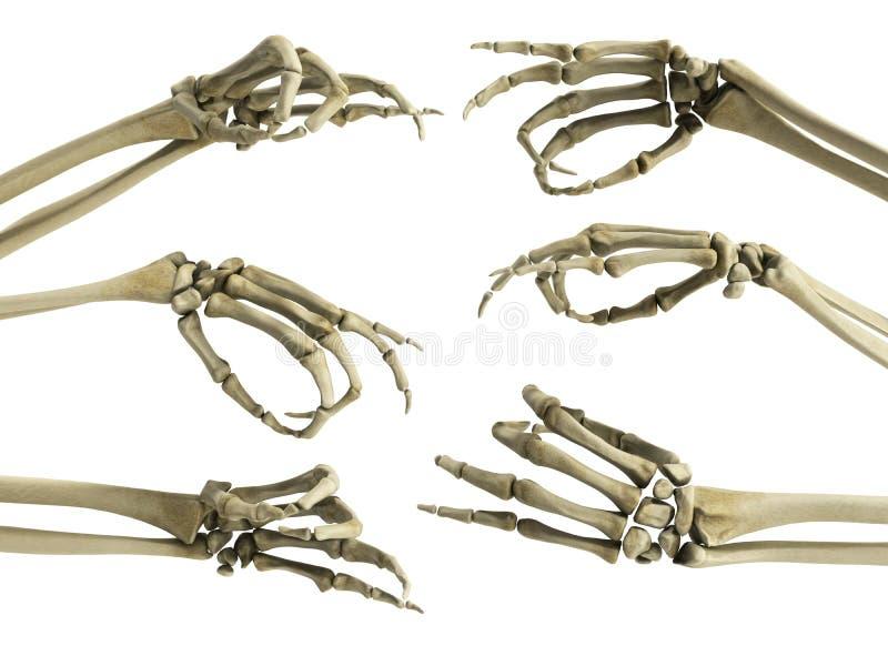 O esqueleto da mão mostra que os dedos 3d rendem no branco ilustração stock