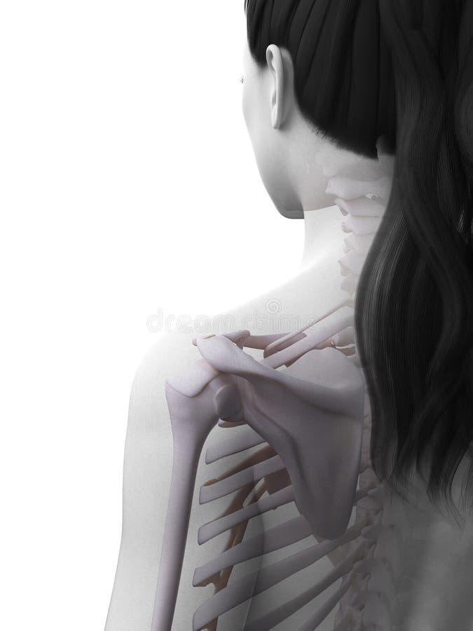 O esqueleto fêmea ilustração royalty free
