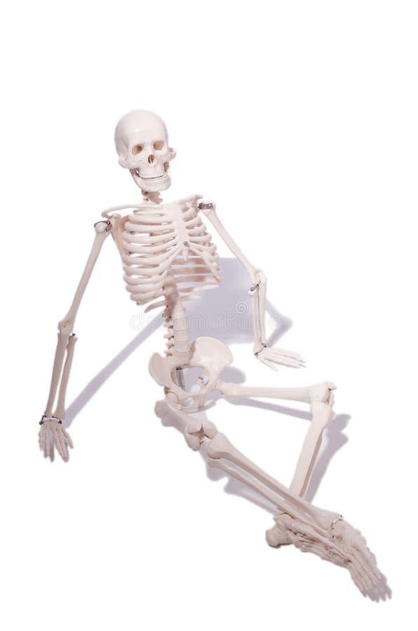 O esqueleto no conceito engraçado no branco imagem de stock
