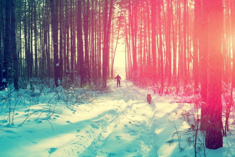 O esquiador com um cão na floresta do inverno fotos de stock royalty free