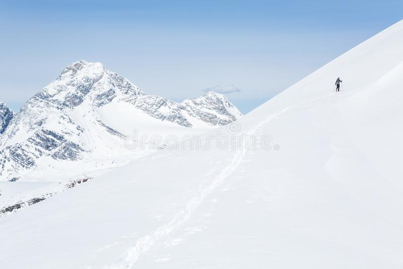 O esquiador de Backcountry que descasca até jovens repica Alpinismo do esqui em Rocky Mountains do parque nacional de geleira de  foto de stock