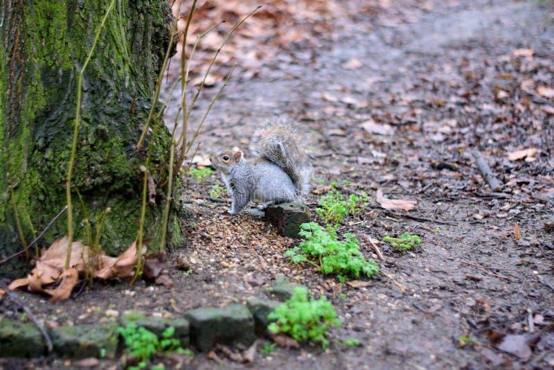 O esquilo e a árvore fotos de stock