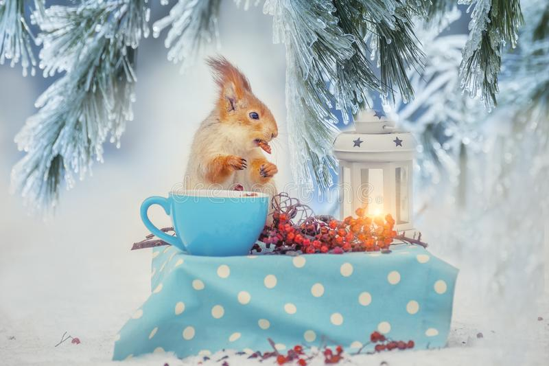 O esquilo na tabela está comendo porcas de um copo em uma clareira do inverno da floresta Imagem do inverno da floresta do conto  imagem de stock