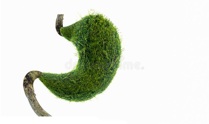 O estômago humano é forte Os órgãos internos são dados forma por árvores verdes ambiente ilustração do vetor