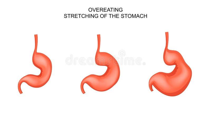 O estômago, dilatado de comer demais ilustração stock