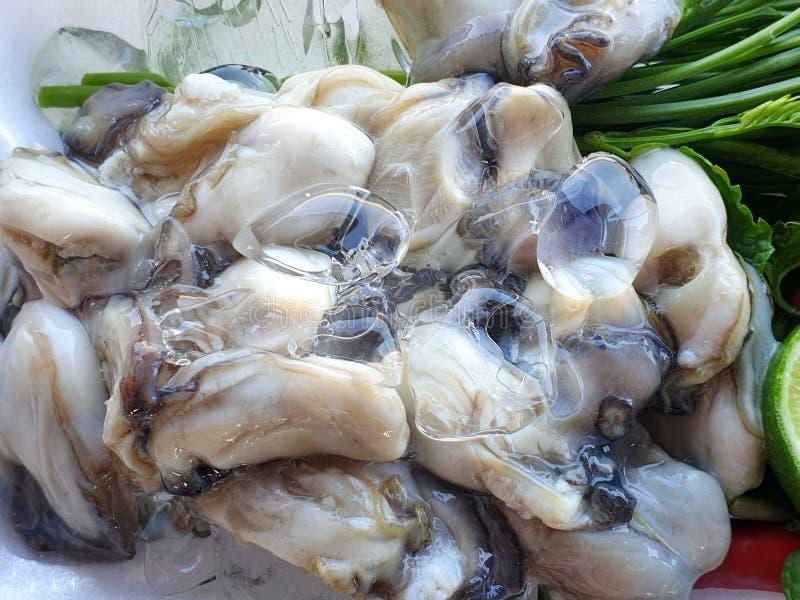O estilo tailandês do alimento, ostras frescas com vegetais acácia, limão cortou como um fundo imagem de stock