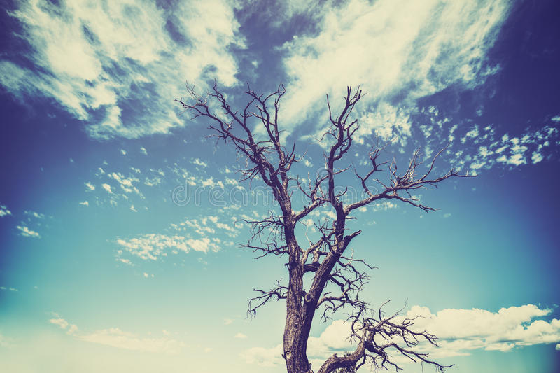 O estilo velho do filme do vintage murchou a árvore com efeito pesado da vinheta fotografia de stock