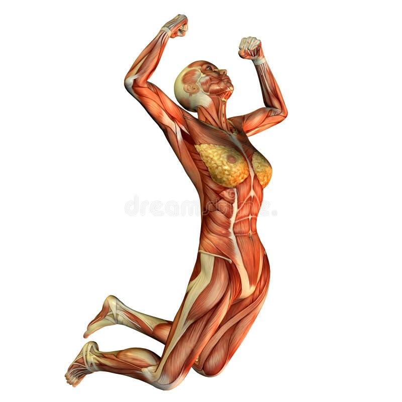O estudo do músculo, mulheres faz o pulo ilustração royalty free