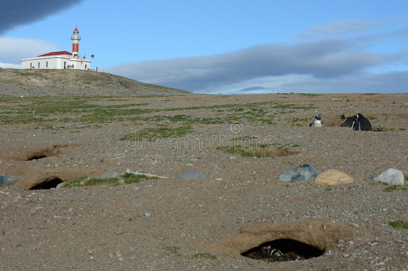 O farol na ilha de Magdalena Pinguins de Magellanic no santuário do pinguim em Magdalena Island no passo de Magel foto de stock