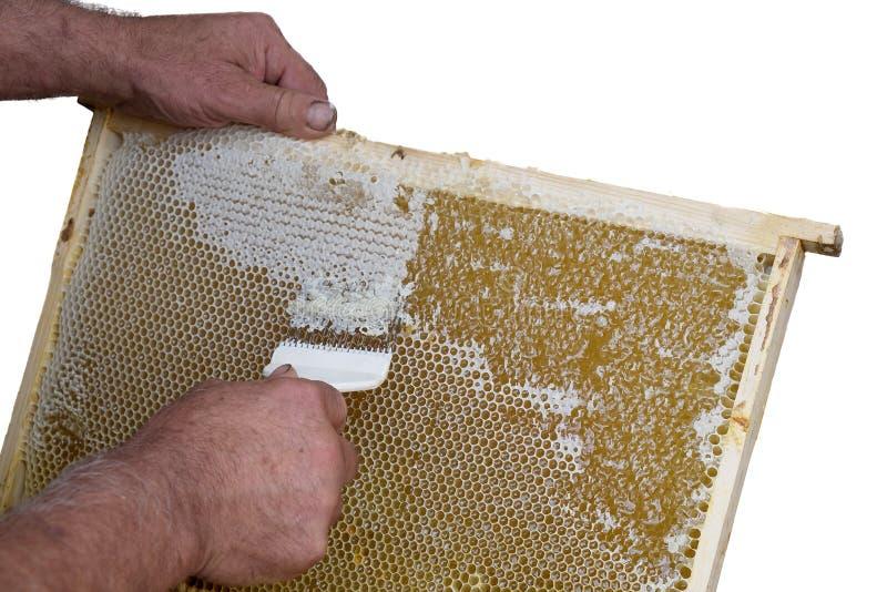 O favo de mel abrirá e destampado para o mel da colheita fotos de stock