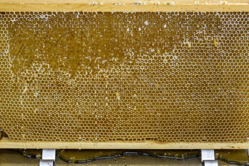 O favo de mel doce do pente dourado amarelo lustroso do mel goteja o fluxo durante o tema da abelha do fundo da colheita fotos de stock