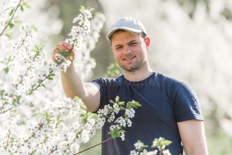 O fazendeiro analisa o pomar de cereja da flor com as árvores de florescência em s fotos de stock royalty free
