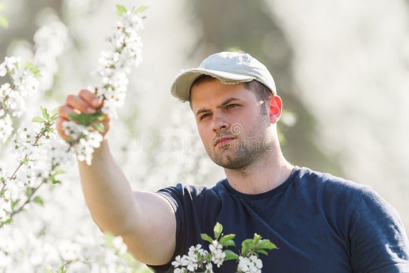 O fazendeiro analisa o pomar de cereja da flor com as árvores de florescência em s fotografia de stock royalty free