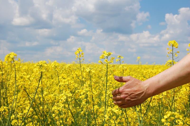 O fazendeiro cede a colheita deste ano foto de stock