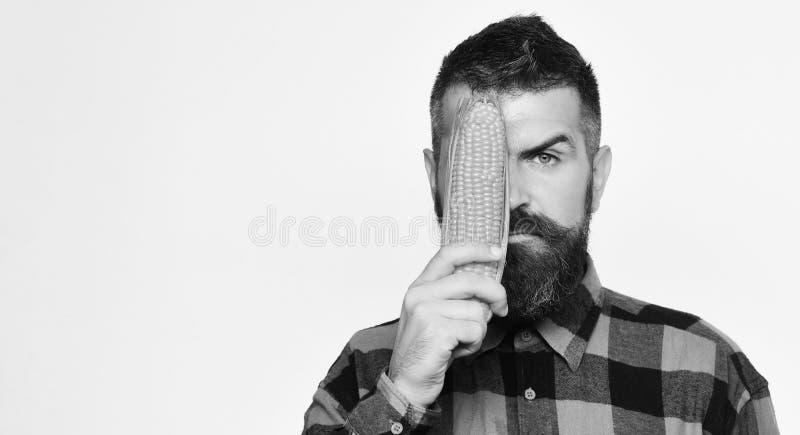 O fazendeiro com a cara séria com o homem escondendo da colheita das mostras do indivíduo do olho do milho amarelo com barba guar foto de stock