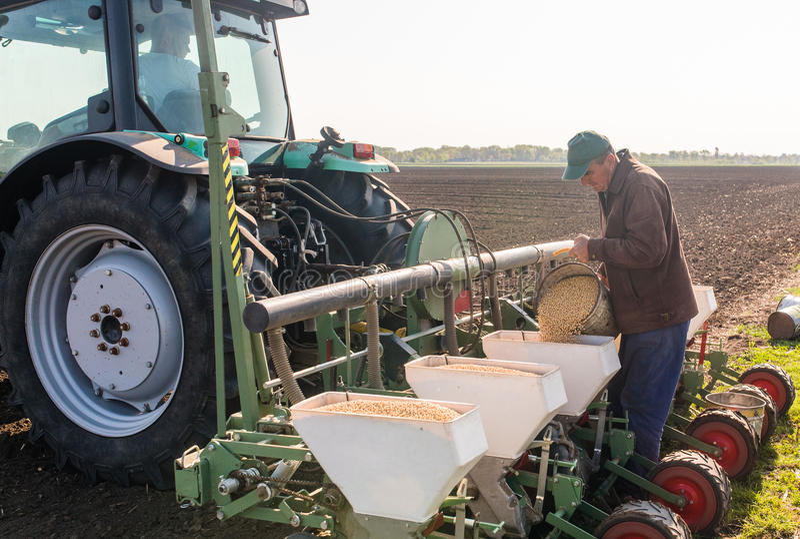 O fazendeiro com a semente de derramamento da soja da lata para semear colhe no agricultura fotos de stock