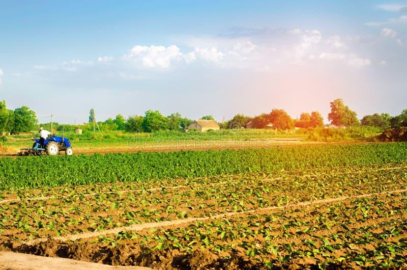 O fazendeiro cultiva o campo com um trator Agricultura, vegetais, produtos agrícolas orgânicos, agroindústria terras foto de stock royalty free