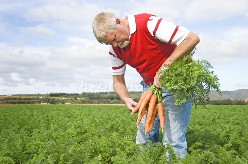 O fazendeiro da cenoura foto de stock