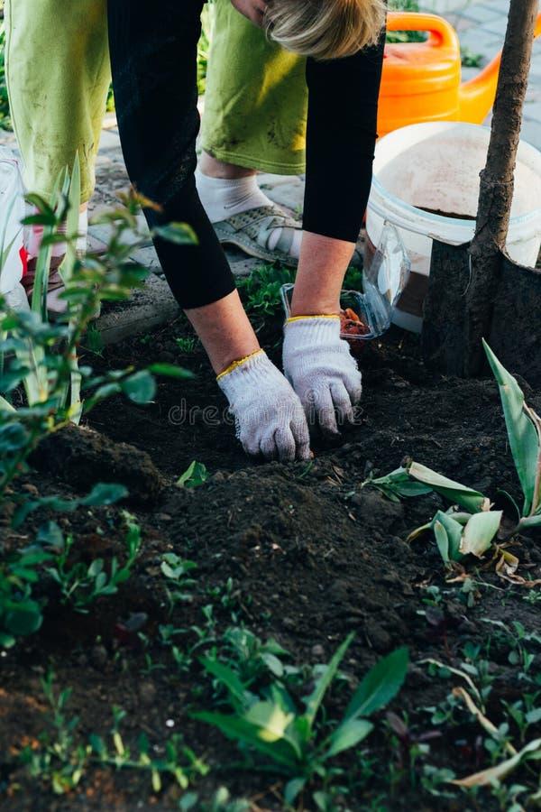 O fazendeiro da mulher toma das plantas na plantação cultivar fotografia de stock royalty free