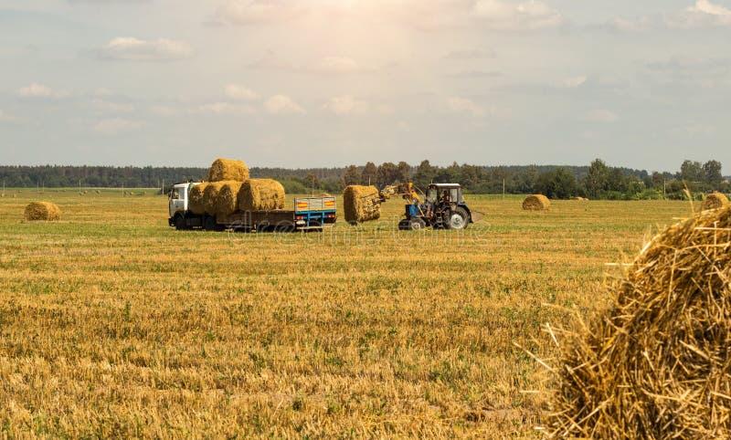 O fazendeiro em um trator escolhe o pacote do monte de feno e das cargas do feno no reboque, agricultura fotografia de stock