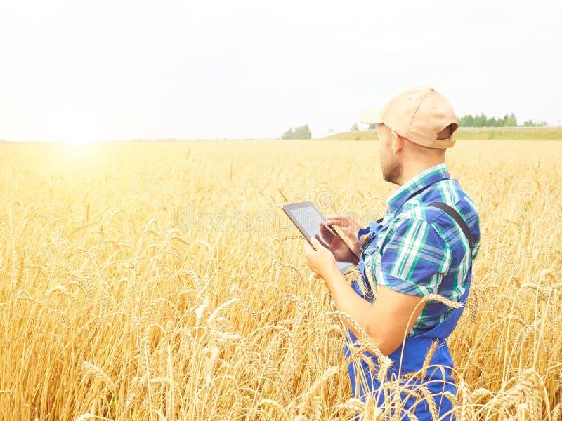 O fazendeiro em uma camisa de manta controlou seu campo e trabalho no tabl fotografia de stock royalty free