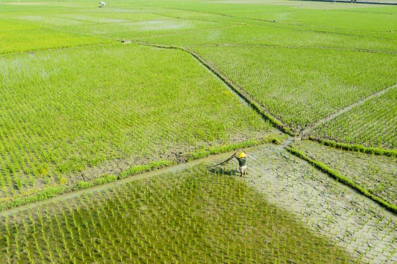 O fazendeiro masculino trabalha com uma grade no campo do arroz imagens de stock royalty free