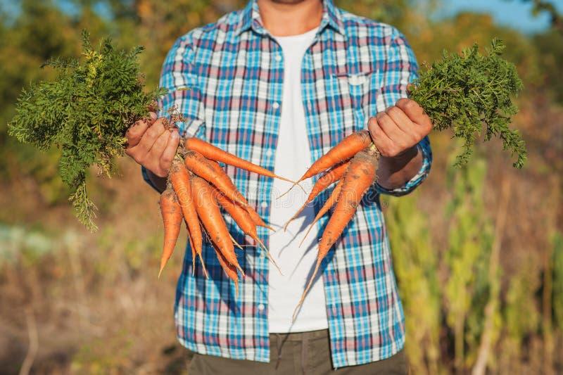 O fazendeiro novo Man que fica e que guarda o grupo colheu a cenoura fresca no jardim Bio vegetais orgânicos naturais Vila do paí fotografia de stock royalty free