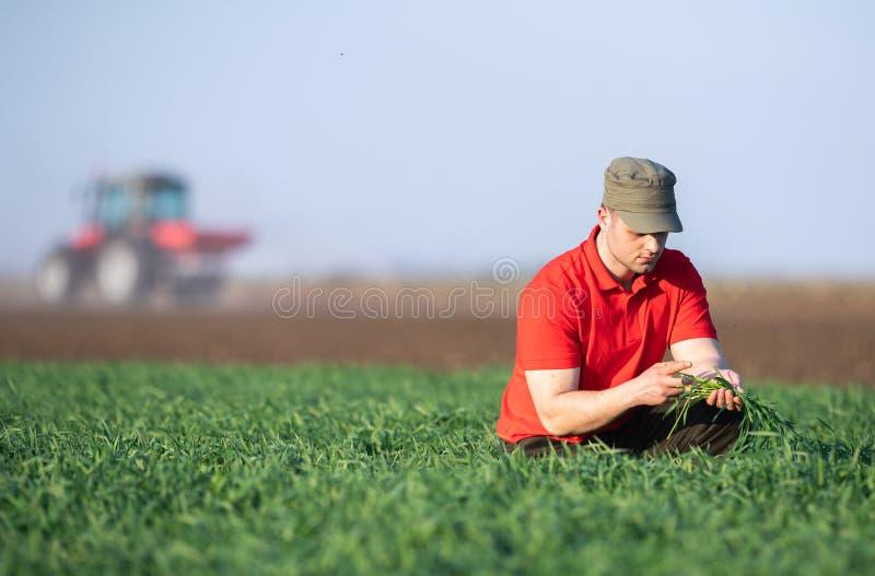 O fazendeiro novo que examing plantou campos de trigo fotografia de stock royalty free