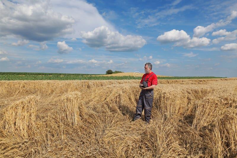 O fazendeiro ou o agrônomo inspecionam o campo de trigo danificado foto de stock