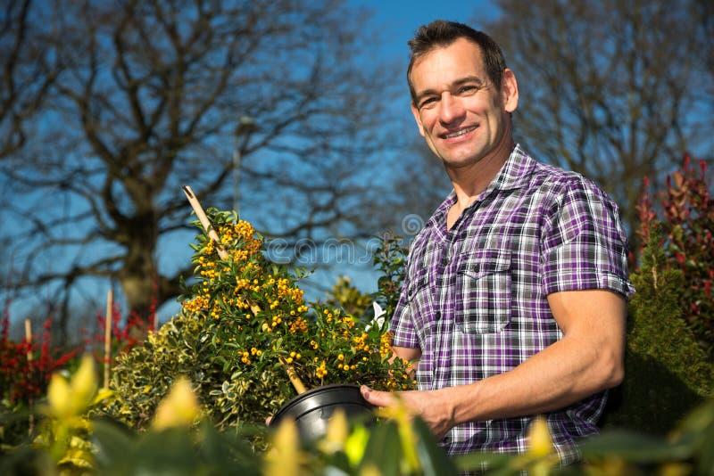 O fazendeiro ou o jardineiro olham o arbusto com bagas fotos de stock royalty free