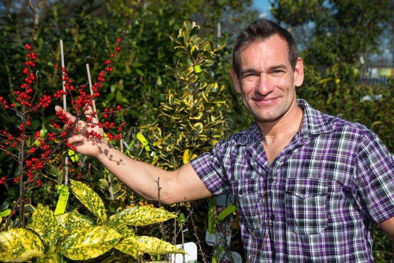O fazendeiro ou o jardineiro olham o arbusto com bagas imagem de stock