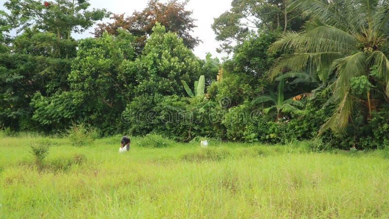 O fazendeiro que planta na terra org?nica do arroz 'paddy' fotos de stock royalty free