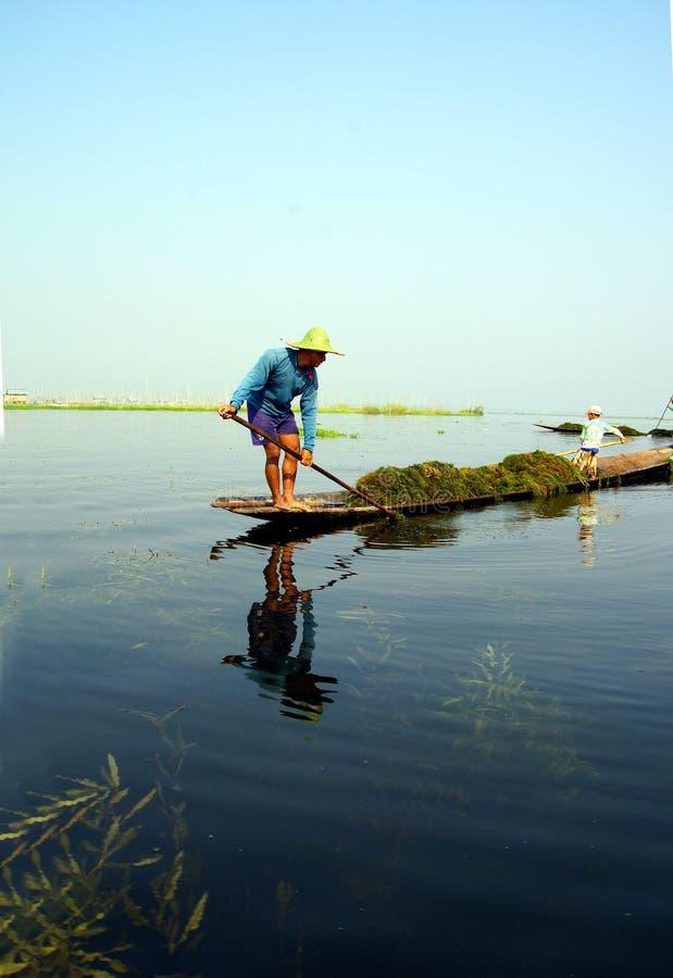 O fazendeiro recolhe a grama do lago foto de stock royalty free
