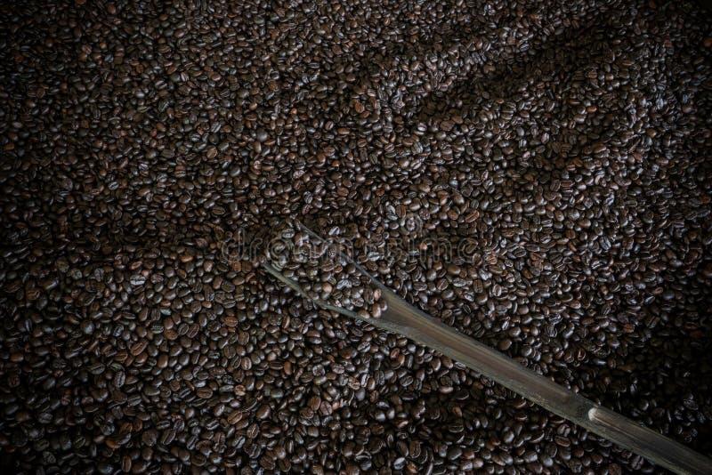 O feijão de café na planta de repreensão e a vinheta limitam o fundo imagens de stock royalty free