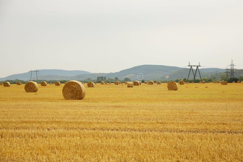 o feno da grama seca, torcido em pilhas densas na altura de preparar o gado alimenta, close-up em um campo agr?cola contra um c?u fotos de stock