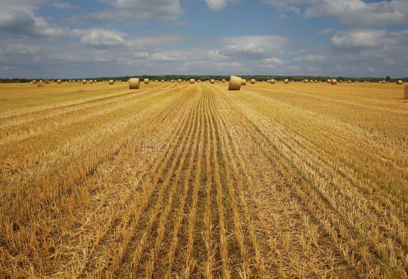 o feno da grama seca, torcido em pilhas densas na altura de preparar o gado alimenta, close-up em um campo agr?cola contra um c?u fotografia de stock