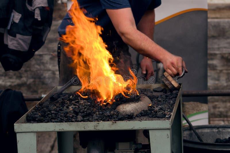 O ferreiro segura o ferro de porco na forja de um ferreiro fotografia de stock royalty free