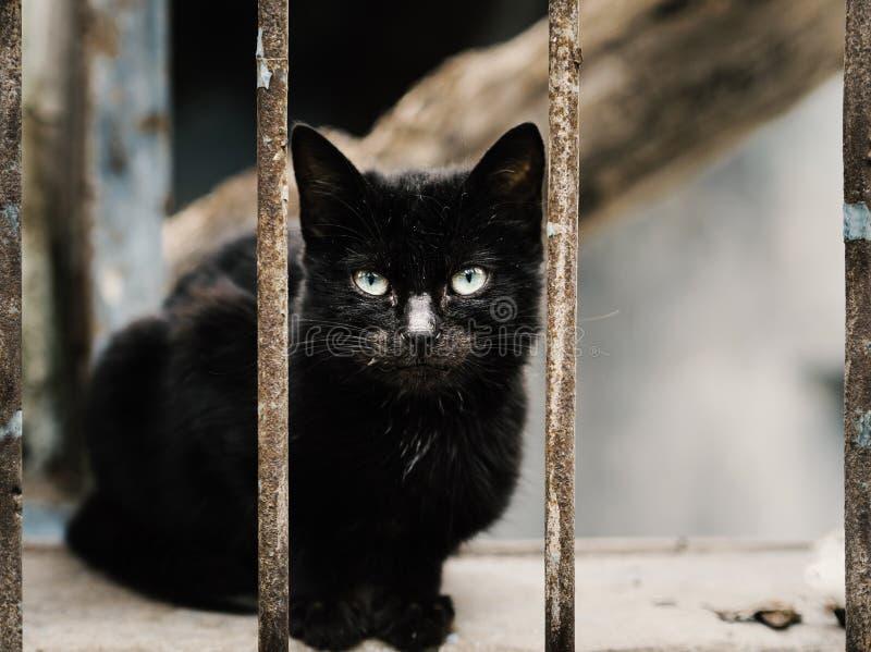 O ferro oxidou os trilhos e gato preto que estão no meio close-up disperso preto do gato foto de stock