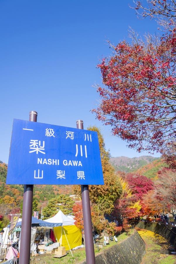 O festival do kairo de Momiji é cor bonita do outono das folhas de bordo de Japão no corredor do bordo em imagem de stock