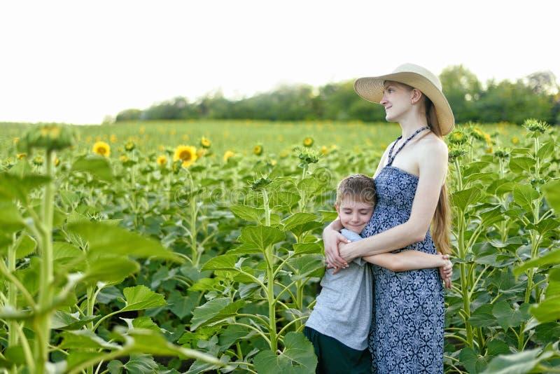 O filho pequeno feliz abraça a posição grávida da mãe em um campo de girassóis de florescência foto de stock royalty free